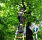 Pompieri su un albero per salvare un gatto